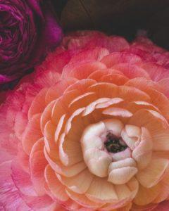 photo de fleur toulouse